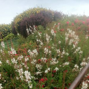 Wild flowers on Sword Beach